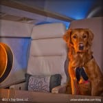 Pet Safety and Business Aviation