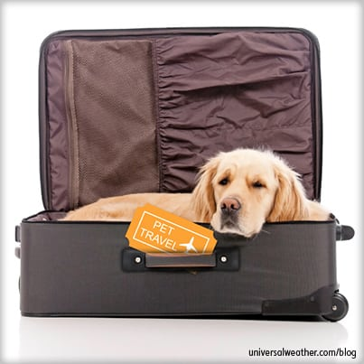 Pet Passport Travel – Now Available at London Stansted Airport (EGSS)