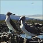 Business Aircraft Operations to the Galapagos Islands – Part 2: Operating Considerations